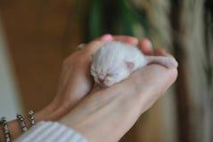 Newborn little kitten Stock Image