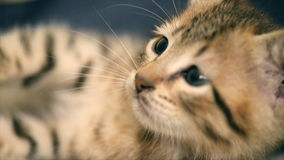 Newborn little pussy is looking around. stock footage