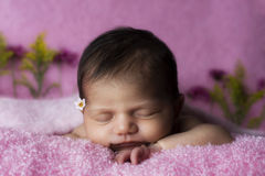 Newborn on pink. Newborn laying down in a pink soft blanket Stock Image