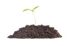 Newborn plant Royalty Free Stock Photo