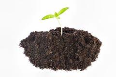 Newborn plant Royalty Free Stock Image