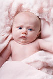 Newborn portrait Royalty Free Stock Image