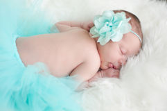 Newborn portrait of baby girl in teal tutu sleeping. Royalty Free Stock Photography