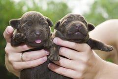 Newborn Puppies Stock Photo
