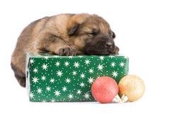 Newborn puppy Stock Photography