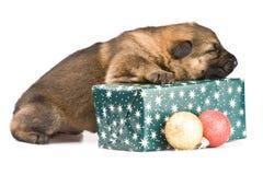 Newborn puppy Stock Photos
