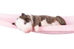 Newborn puppy in a hammock Stock Photo