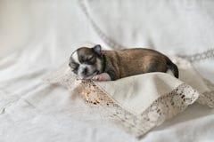 Newborn puppy stock photo