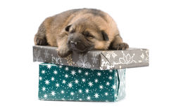 Newborn puppys Stock Images