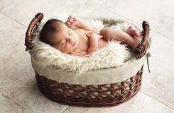 Newborn resting in fur blanket Stock Photography