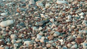 Newborn sea turtle escapes from sea waves getting to dry land. Wild marine fauna. Baby turtle crawling on beach to sea. Small turtle crawling on stones to ocean stock video