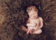 Newborn on sheep's wool Royalty Free Stock Photo