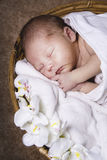 Newborn sleeping Stock Photo