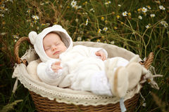 Newborn sleeping in a basket Royalty Free Stock Images
