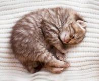 Newborn sleeping british baby kitten. On woolen background Stock Photos
