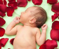 Newborn tenderness Royalty Free Stock Images