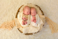 Newborn twin babies Stock Image
