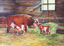 Newborn Twin Calves Royalty Free Stock Images