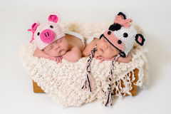 Newborn twin girls wearing pig and cow hats Stock Photos