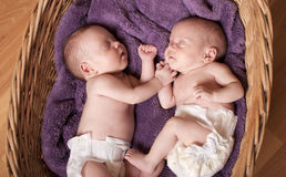 Newborn twins Royalty Free Stock Photography