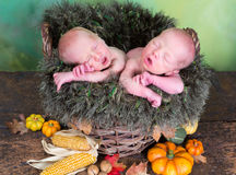 Newborn twins in autumn basket Stock Photos