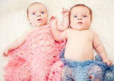 Newborn twins Stock Images