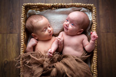 Newborn twins inside the wicker basket Royalty Free Stock Image