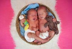 Newborn twins kids sleeps. In the basket Royalty Free Stock Photo