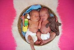 Newborn twins kids sleeps. In the basket Stock Images