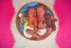 Newborn twins kids sleeps. In the basket Royalty Free Stock Photography