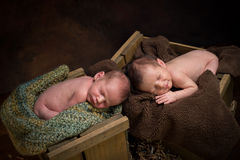 Newborn twins sleeping Stock Photo
