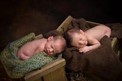 Newborn twins sleeping Stock Photo