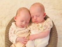 Newborn twins together Stock Image
