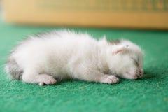 Newborn white and gray kitten on a green carpet. White cat newborn.  stock photo