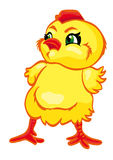 Newborn yellow  chick. Cartoon character Royalty Free Stock Photos