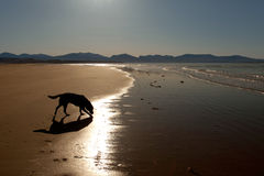 Newborough Beach Stock Image