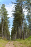 Newborough Forest Anglesey Royalty Free Stock Photo