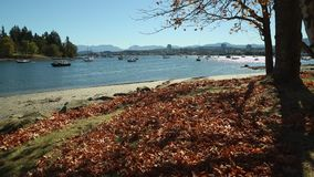 Newcastle Island Fall, Nanaimo. The view from Newcastle Island across the docks with downtown Nanaimo in the background. British Columbia, Canada stock video footage