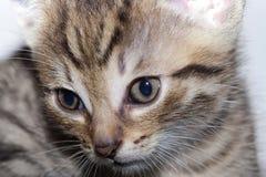 Neweborn kittens Royalty Free Stock Images