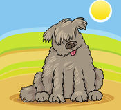 Newfoundland dog cartoon illustration Royalty Free Stock Images