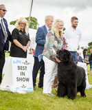 Newfoundland dog wins best in show. Royalty Free Stock Images