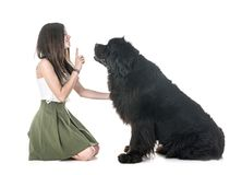 Newfoundland dog and woman royalty free stock photography