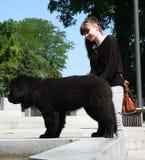 Newfoundlander puppy Stock Photo