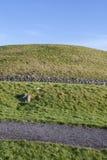 Newgrange in Irlanda Fotografia Stock Libera da Diritti