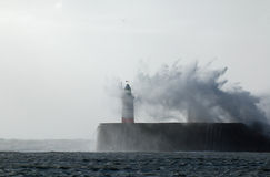 Newhaven Lighthouse and Gull Stock Images