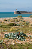 Newhaven Lightouse and Shore Royalty Free Stock Photo