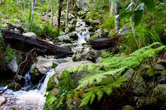 Newland& x27; поток леса s Стоковые Фото