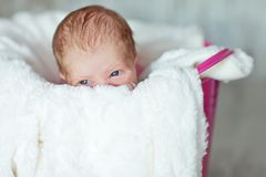 Newly born child in pink bucket. Newly born baby girl on the white fur blanket placed in pink bucket royalty free stock images