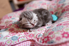 Newly born kitten Royalty Free Stock Photos