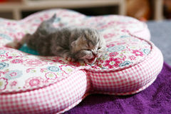 Newly born kitten Royalty Free Stock Images